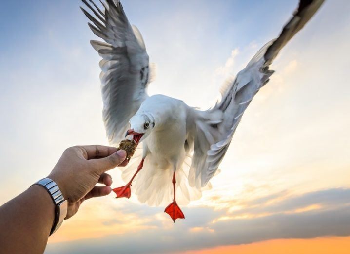 Seagulls are good luck